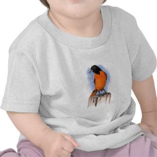 Baltimore Oriole en lápiz del color: Arte del Camisetas