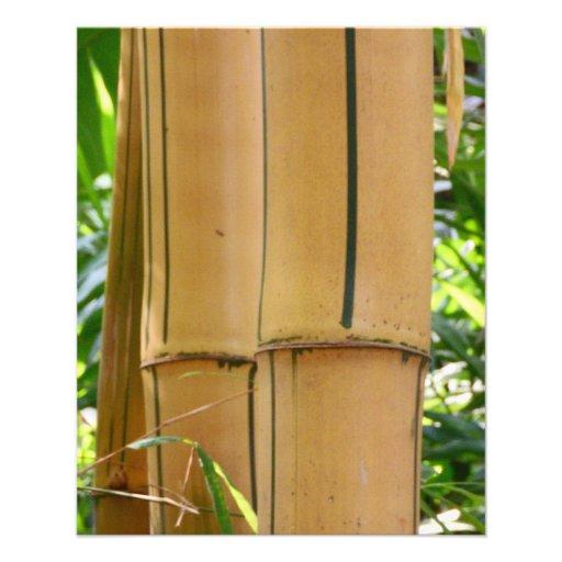 Bambú Flyer Personalizado