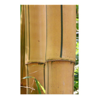 Bambú Flyer A Todo Color