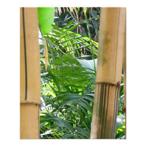 Bambú Tarjetones
