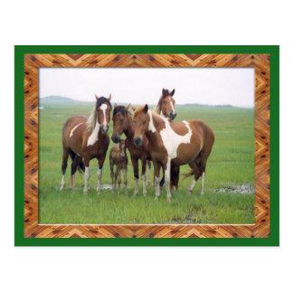 Banda de la postal de los caballos del Appaloosa