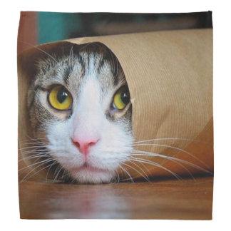 Bandana Gato de papel - gatos divertidos - meme del gato -