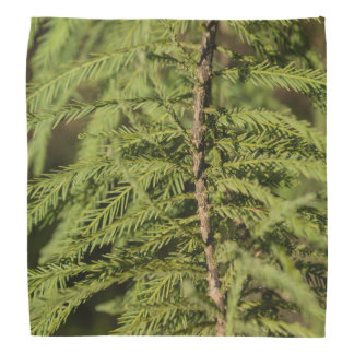 Bandana Rama de Cypress calvo