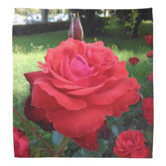 Bandana Rosas rojos magníficos