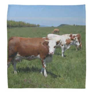 Bandana Vacas en el pasto