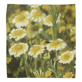 Bandana Wildflowers amarillos y girasoles blancos