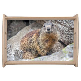 Bandeja alpina de la marmota