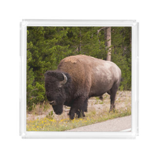 Bandeja de la porción de la foto del búfalo del