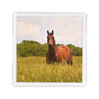 Bandeja de la porción del caballo del semental