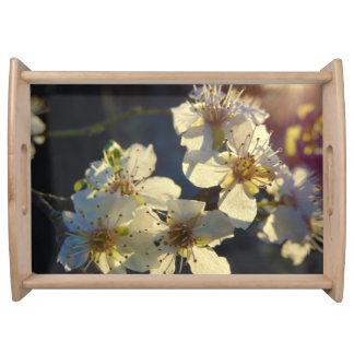 Bandeja de las flores de cerezo
