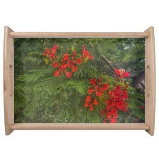 Bandeja Flor roja contra la impresión verde del fondo en