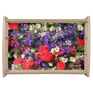 Bandeja Flores anuales púrpuras, rojas, y blancas