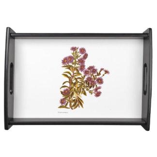 Bandeja Flores de la ciencia NZ del vintage - semidentata
