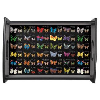 Bandeja Mariposas del mundo (oscuro)