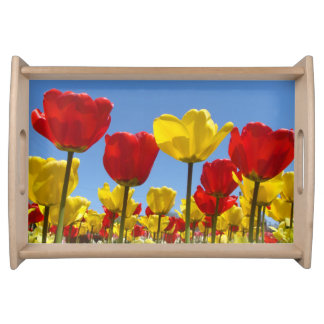 Bandeja soleada de la porción del tulipán