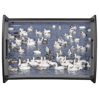 Bandeja Una multitud de los gansos de nieve en la playa