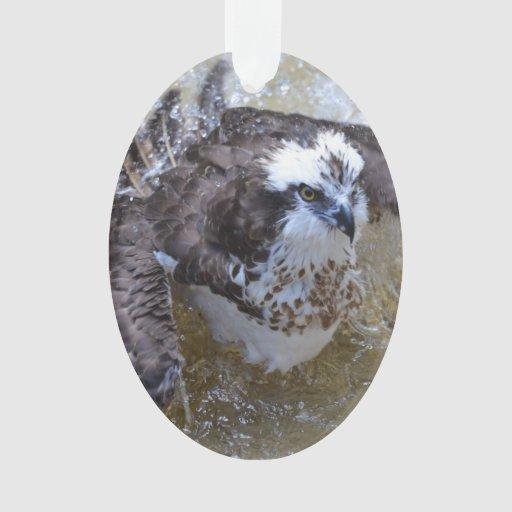 Baño de Osprey