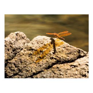Baño de Sun de la libélula Postal