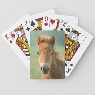 Baraja De Cartas Foto frontal linda de la cabeza de caballo del