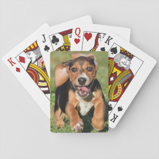 Baraja De Cartas Funcionamiento loco del perrito del beagle