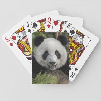 Baraja De Cartas Panda joven feliz, China