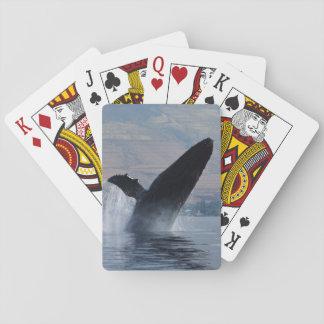 Baraja De Cartas violación de la ballena jorobada
