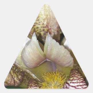 Barbudo Pegatina Triangular