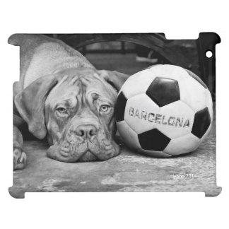 Barcelona's soccer fanatic dog. Barcelona, Spain
