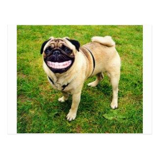 barro amasado de la sonrisa del perro postal