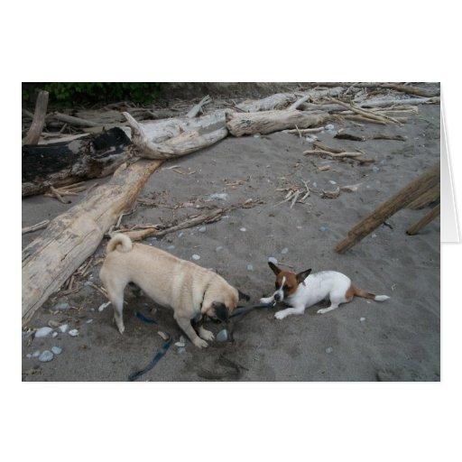 Barro amasado y chihuahua que juegan en la playa felicitación