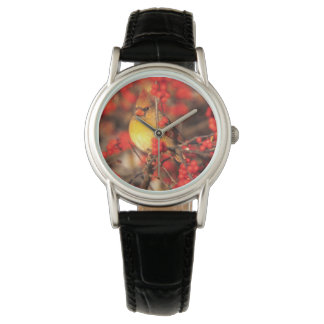 Bayas femeninas y rojas cardinales, IL Reloj