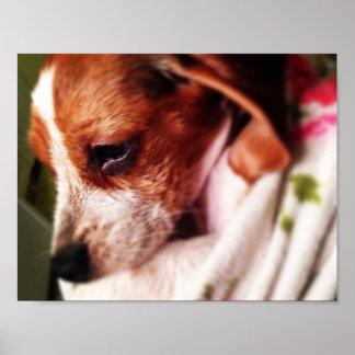 Beagle Bathtime Póster