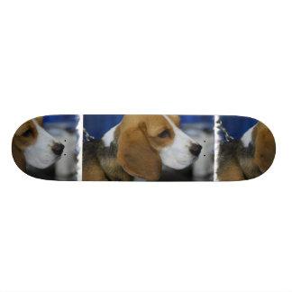 Beagle dulce monopatines personalizados