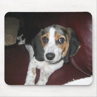 Beagle el domingo alfombrilla de ratón