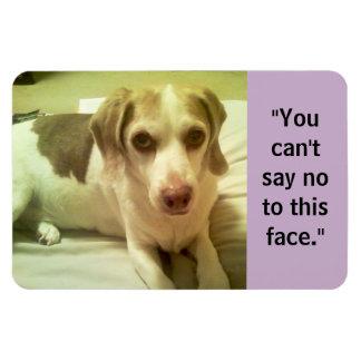 """Beagle """"no puede decir no que imán de 4x6 de esta"""