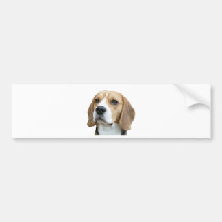 beagle etiqueta de parachoque
