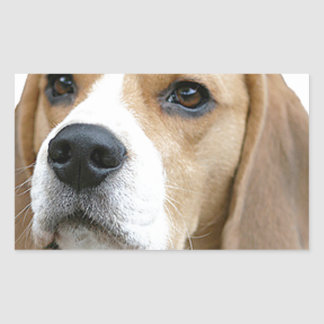 beagle pegatina rectangular