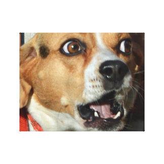 Beagle sorprendido impresión en lienzo