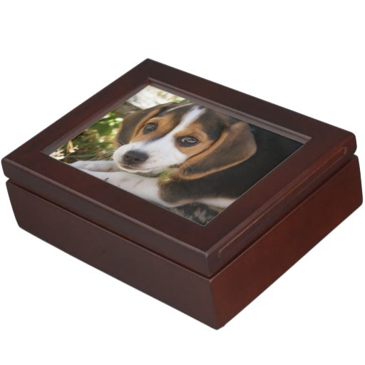 Beagles del perrito caja de recuerdos