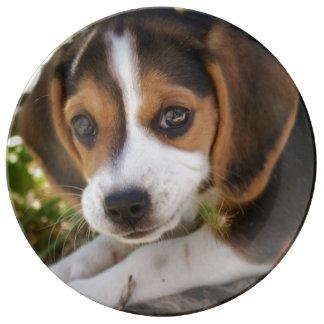 Beagles del perrito plato de cerámica
