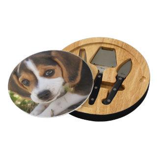 Beagles del perrito