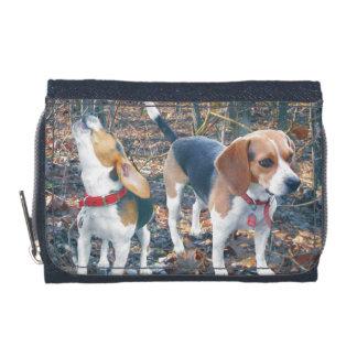 Beagles en la cartera del beagle de maderas