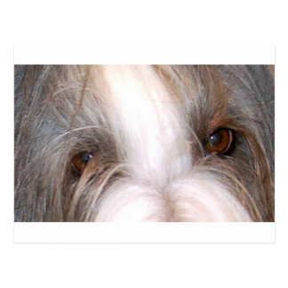 Bearded_collie eyes.png postal