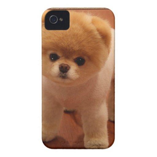 Bebé adorable del perrito del mascota del perro de iPhone 4 Case-Mate carcasas