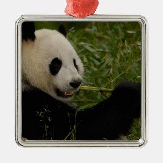 Bebé de la panda gigante que come el bambú Ailuro Ornamentos De Navidad