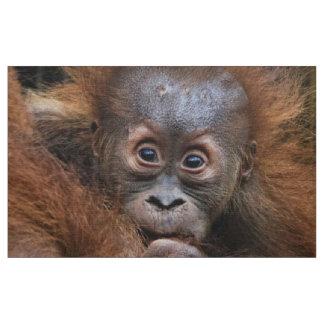 Bebé dulce de Orang Telas