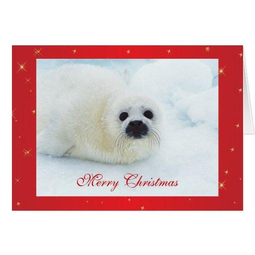 Bebé lindo de cría de foca en tarjeta de Navidad d