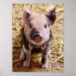 Bebés lindos del corral de los animales del campo  poster