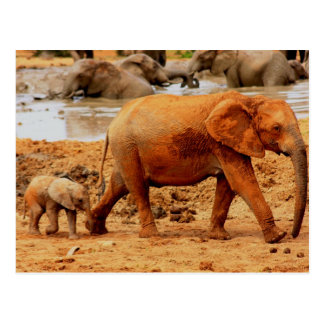 becerro y elefante recién nacidos postal