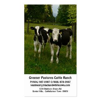 Becerros jovenes del buey de la lechería en el tarjetas de visita